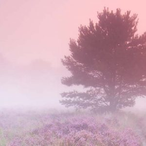 De Mechelse Heide