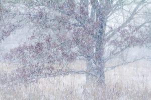 Winterse boom - foto: Johan van de Watering