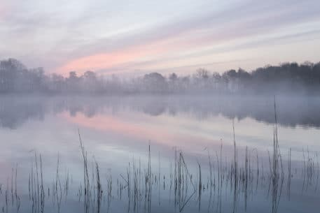 Kalmthoutse Heide - foto: Johan van de Watering