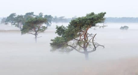 Vliegdennen in de mist - foto: Johan van de Watering