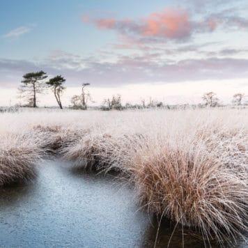 Kalmthoutse Heide - foto: Bob Luijks