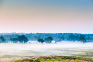 Kalmthoutse Heide - foto: Danny Laps
