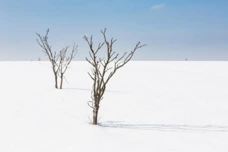 Hoge Venen - foto: Bob Luijks