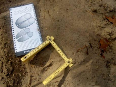 Sporen van hoefdieren determineren - foto: Jan Loos