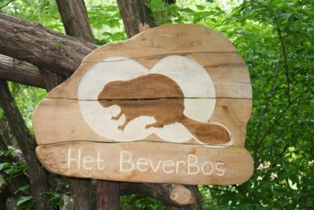 Welkom in het Beverbos - foto: Biesboschcentrum Dordrecht