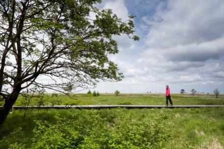 Wandelaar - foto: Bob Luijks