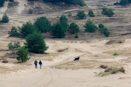 Kootwijkerzand - foto: Jan Depelseneer
