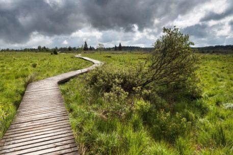 Plankenpad - foto: Bob Luijks