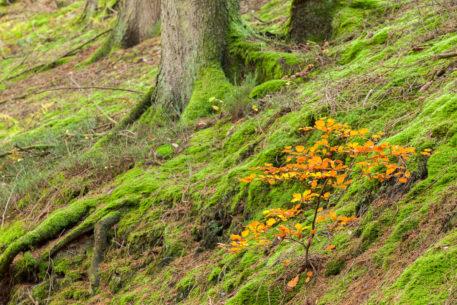 Bos in de Hoge Venen - foto: Marc De Schuyter