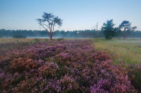 Heide - foto: Marijn Heuts