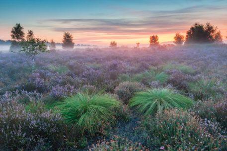 Heide - foto: Danny Laps