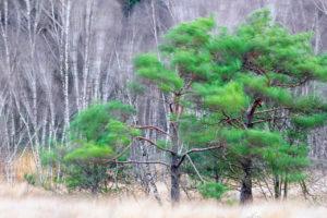 Heidelandschap - foto: Mike Muizebelt