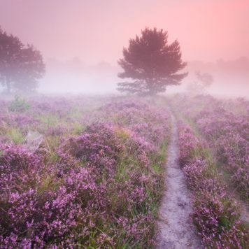 Mechelse Heide - foto: Sam Mannaerts