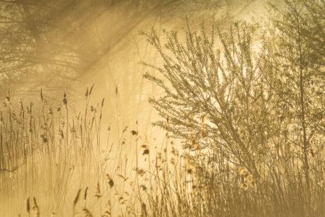 Mistig moeras - foto: Sandy Spaenhoven