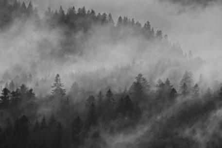 Mistige Ardennen - foto: Sam Mannaerts