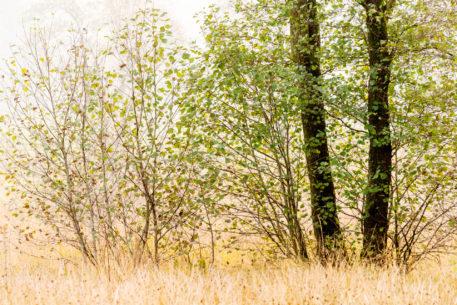 Intiem landschap - foto: Hans Debruyne