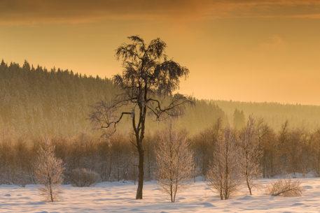 Winters veen - foto: Marijn Heuts