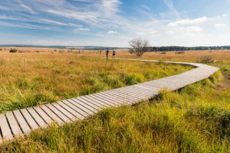 Plankenpad - foto: Dominik Ketz