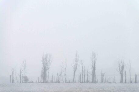 Dode bomen - foto: Nico van Kappel
