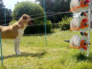 Spaanse Mastiff - foto: Jan Loos